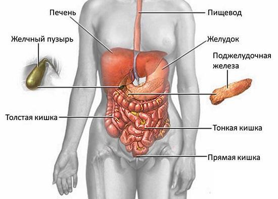 Где находится поджелудочная железа у человека фото